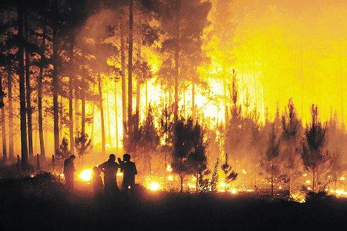 Photo of Resumen de incendios forestales en territorio nacional y la región.
