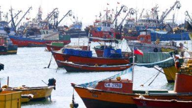 """Photo of """"Ley Longueira"""": Comisión de Pesca aprueba nulidad de Ley de Pesca."""
